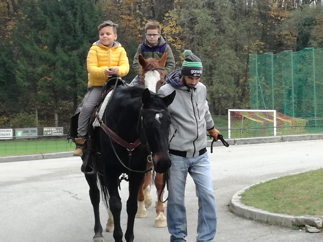 konji-9